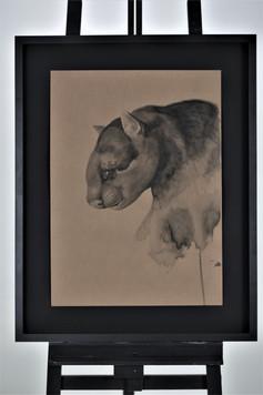 Nome: Ronaldo Diniz Título: Gato mourisco  Herpailurus yagouaroundi (É. Geoffroy, 1803) Técnica: Nanquim sobre papel craft 300g Dimensão: 48x66cm Ano: 2019