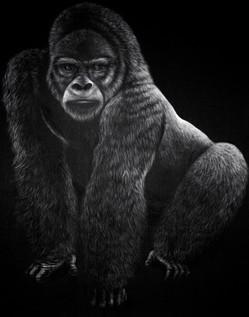 Gorila-das-Montanhas, 2015