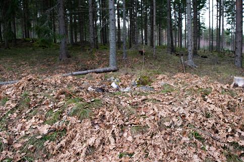 Rundhaug med plyndringsgrop. Jernalder lokalitet. Foto: Eldengaard
