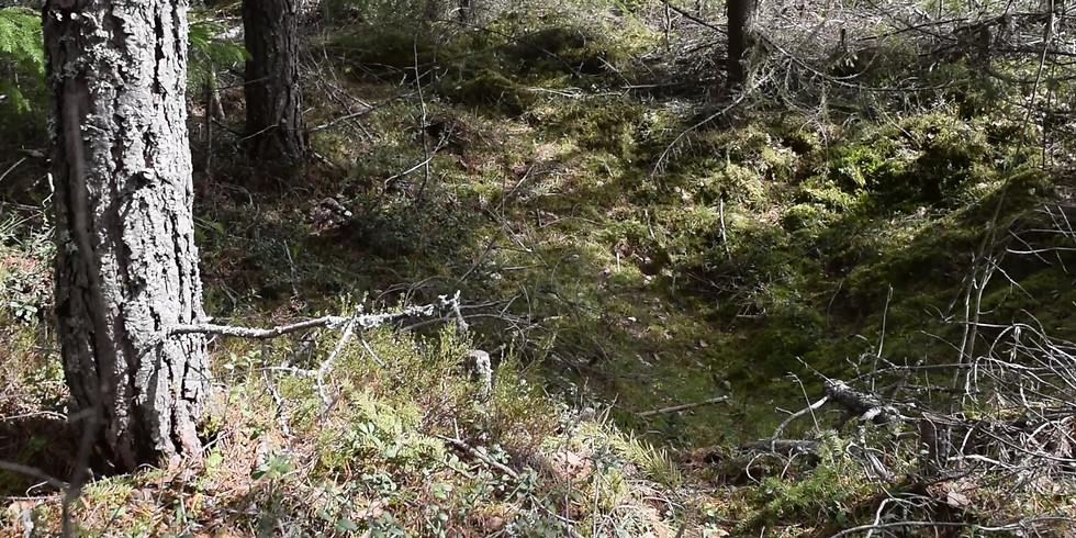 Kullgropene ved Haave (Jernalder-Middelalder)
