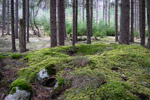 Rundhaug med plyndringsgrop. Yngre jernalder. Foto: Eldengaard