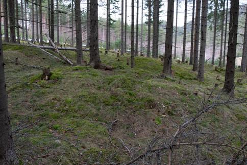 Rundhaug. Yngre jernalder. Foto: Eldengaard