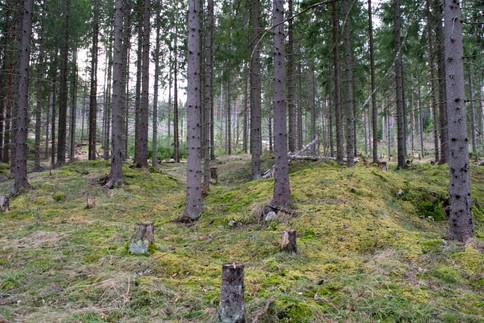 Rundhauger jernalder. Foto: Eldengaard