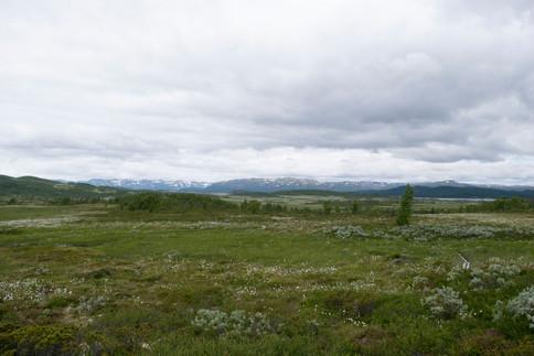 Møsvasstangen landskapsvernområde.