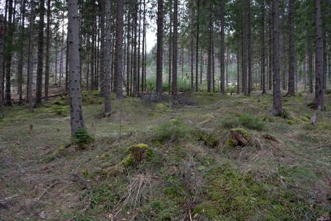 Rundhaug jernalder. Foto: Eldengaard