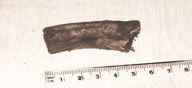 Bein biter funnet ved gravfelt. Foto: Eldengaard