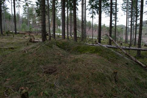 Rundhaug med tydlig plyndringsgrop. Yngre jernalder. Foto: Eldengaard