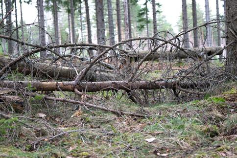 Gjengrodd og skjult gravfelt. Jernalder lokalitet. Foto: Eldengaard