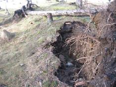Store skader på langgrav ved rotvelt.  Foto: Eldengaard