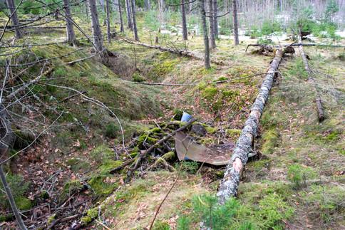 Rundhaug sterkt utgravet mot nord. Inneholder søppel. Jernalder lokalitet. Foto: Eldengaard