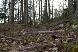 Rundhaug etter rydding. Yngre jernalder. Foto: Eldengaard