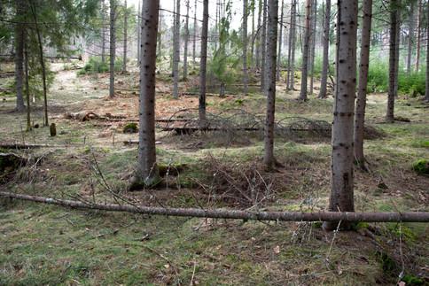 Langgrav dobbeltgrav. Jernalder. Foto: Eldengaard