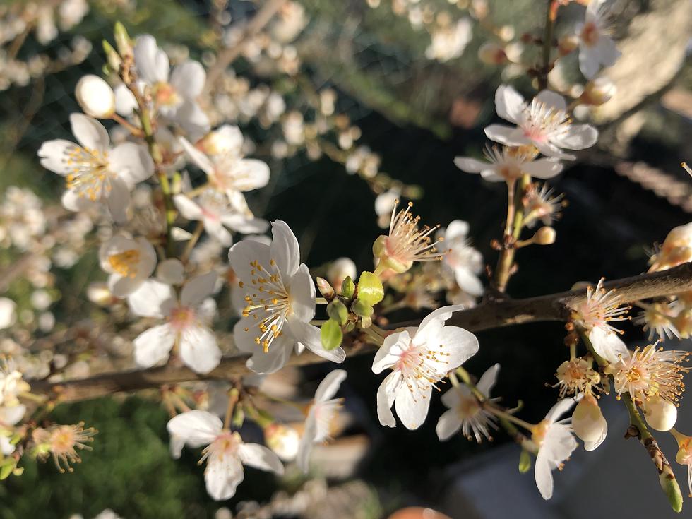 Prootions institus de beauté, promotions soins esthétiques, fleurs de cerisiers