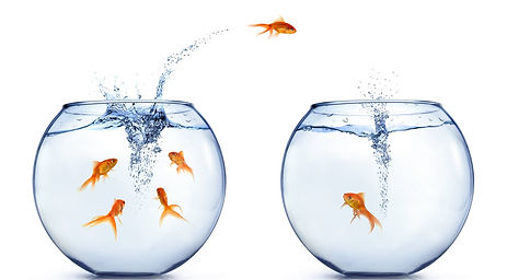 un pesciolino salta da una boccia d'acqua all'altra