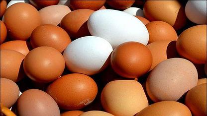 754914-eggs.jpg