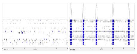 1_DEPA_Spike-Raster-Plot_DIV7_35.jpg