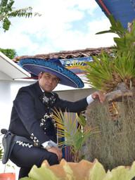 EL BUEY DE JALISCO