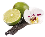 lime%20vanilla%20orchid_edited.png
