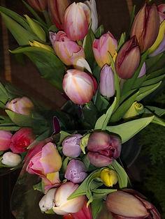 Bouquet d'une dizaine de Tulipes .jpg