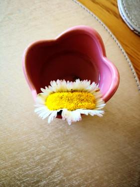 Hybrid daisy