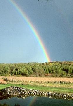 rainbow_208x300.jpg