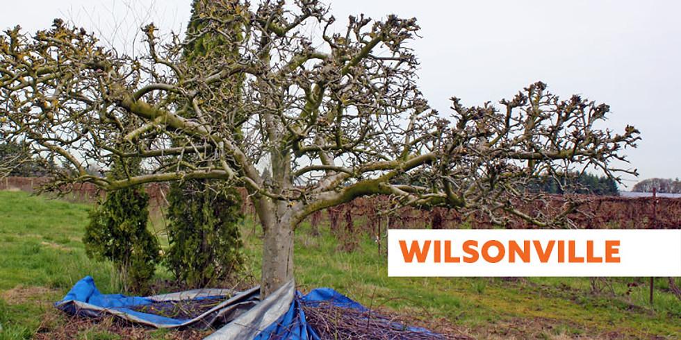 Tree Pruning Seminar