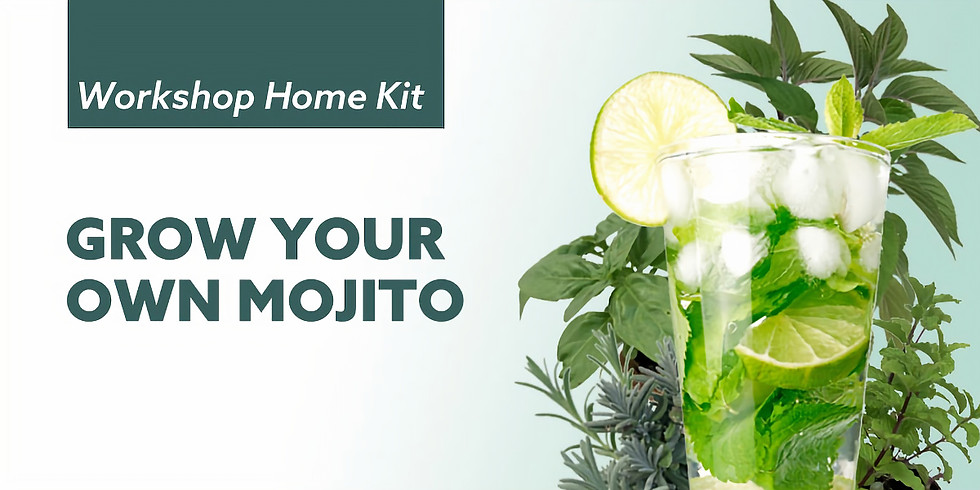 Grow Your Own Mojito