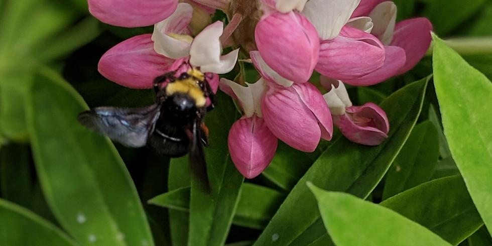 Attracting Pollinators to the Urban Garden