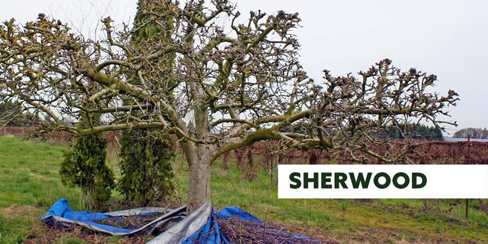 Fruit Tree Pruning Seminar