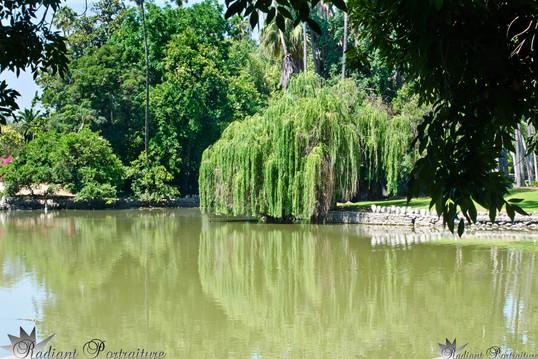 LA Arboretum Pond.jpg