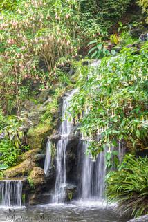 Arboretum Falls 4.jpg