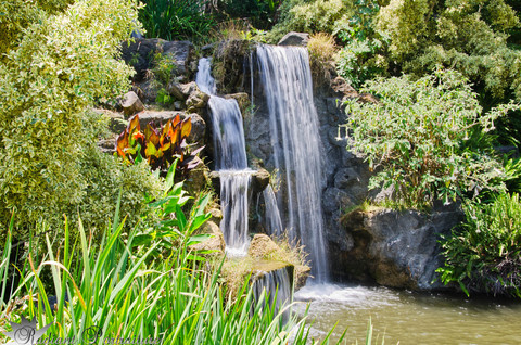 LA Arboretum Falls.jpg