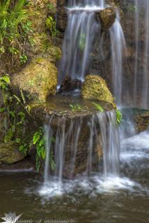 Arboretum Falls 8.jpg