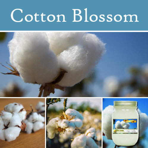 Cotton Blossom