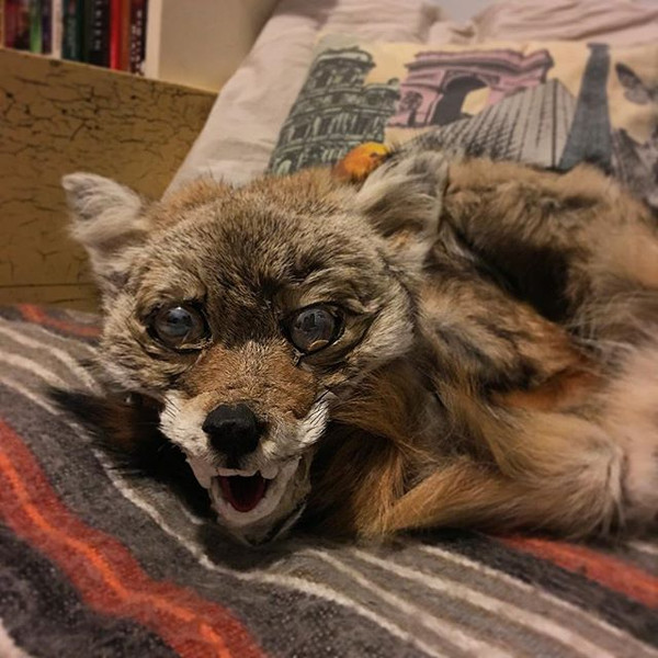 """COYOTE for Outcast Cafe's """"Coyote Girl"""""""