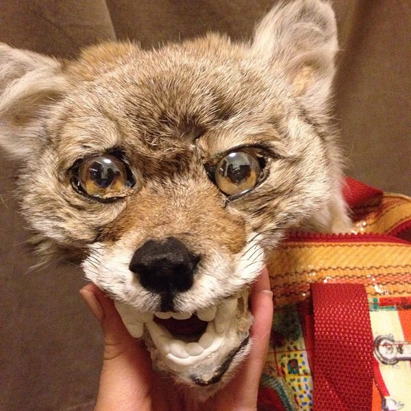 COYOTE head finished