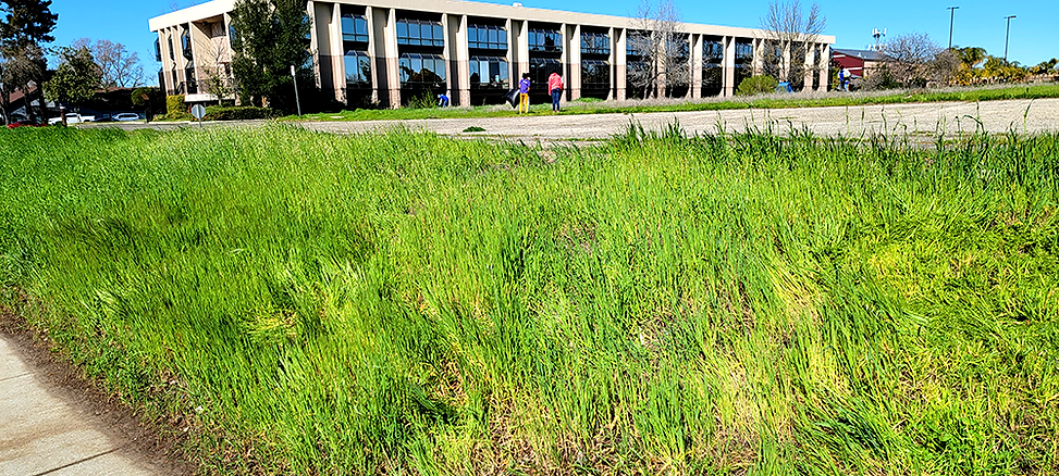 1 Unmowed Grass.png