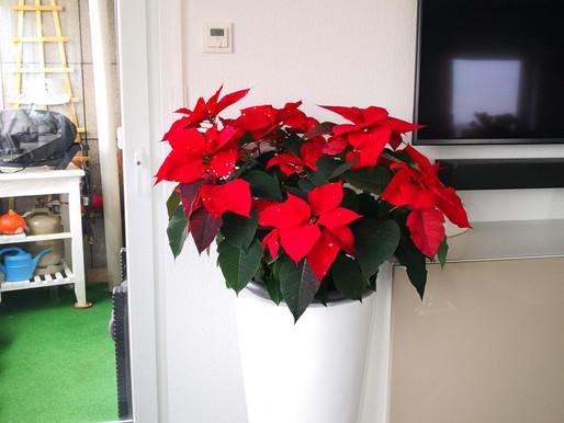 Die Vorweihnachtszeit beginnt...