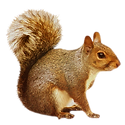 Squirrel 1.png