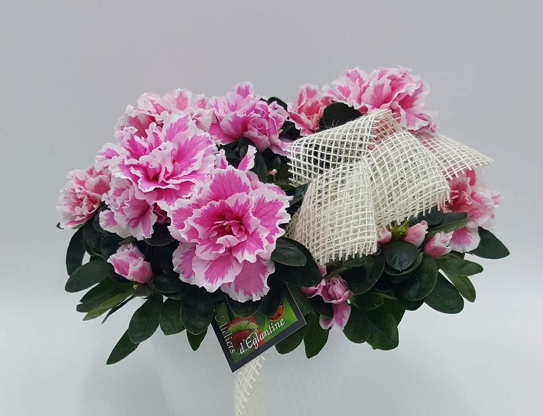 LES ATELIERS D'EGLANTINE, Fleuriste à Eguzon - Plantes vertes et fleuries (36)
