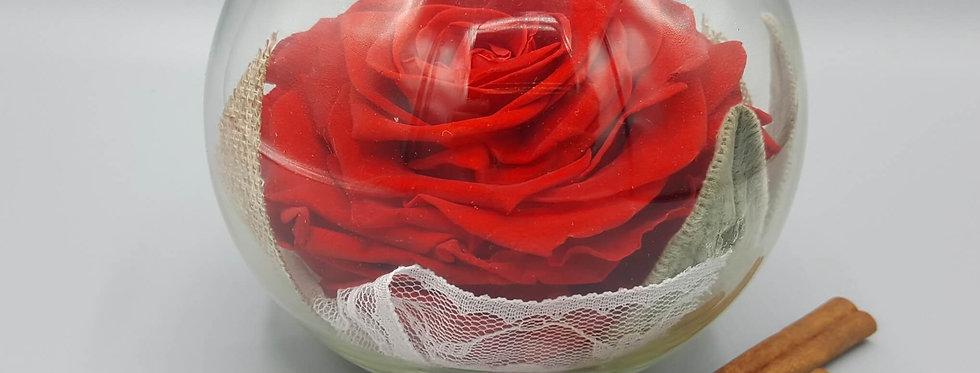 Vase Betty - Rose XXL  -  Stabilisé