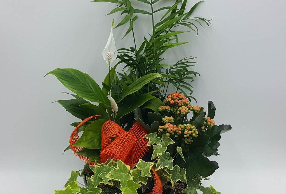 Corbeille de plantes
