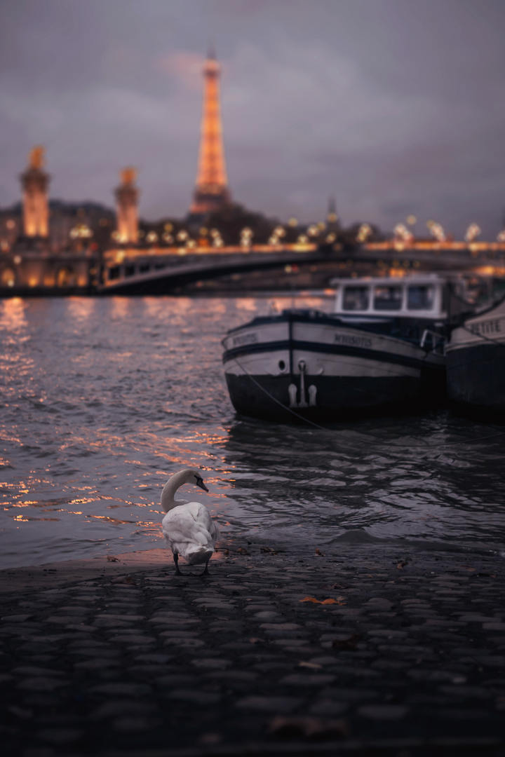 The Eiffel Tower and the swan