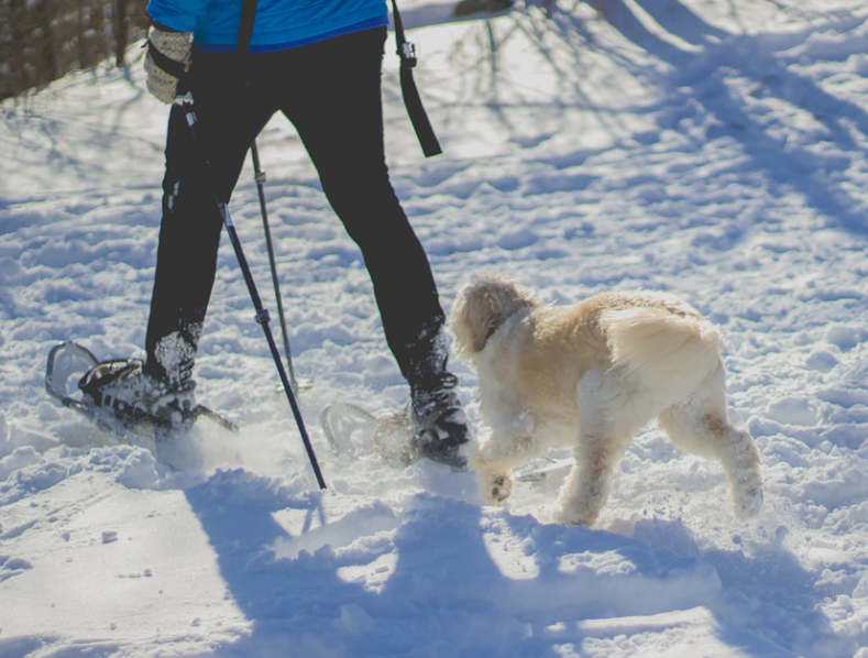 Walking a dog in the snow