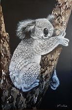 Koala - Fais de jolis rêves