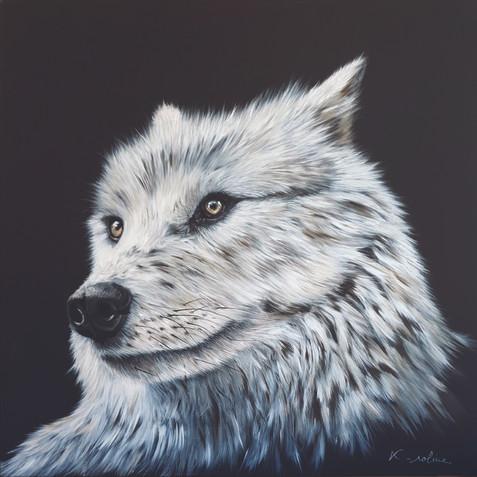 Loup - Il y a comme un loup ...