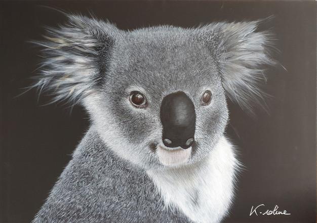 "Koala - ""Accroche-toi"""