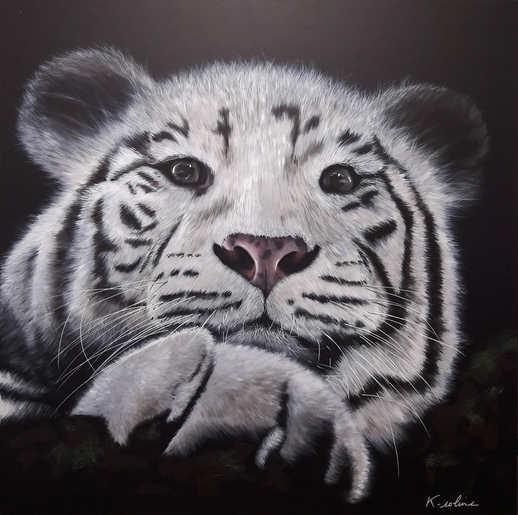 """Tigre - """"Regarde-moi"""""""
