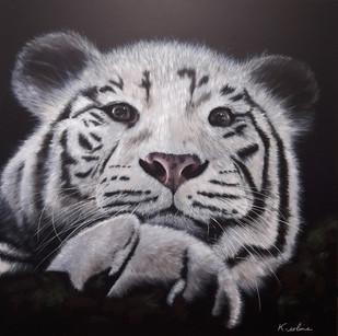 Tigre - regarde-moi