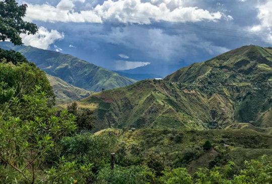 COLOMBIA RESGUARDO - HONEY PROCESS
